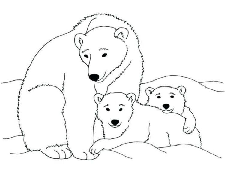 Polar Bear Coloring Pages Printable Polar Bear Coloring Page Bear Coloring Pages Polar Bear Drawing
