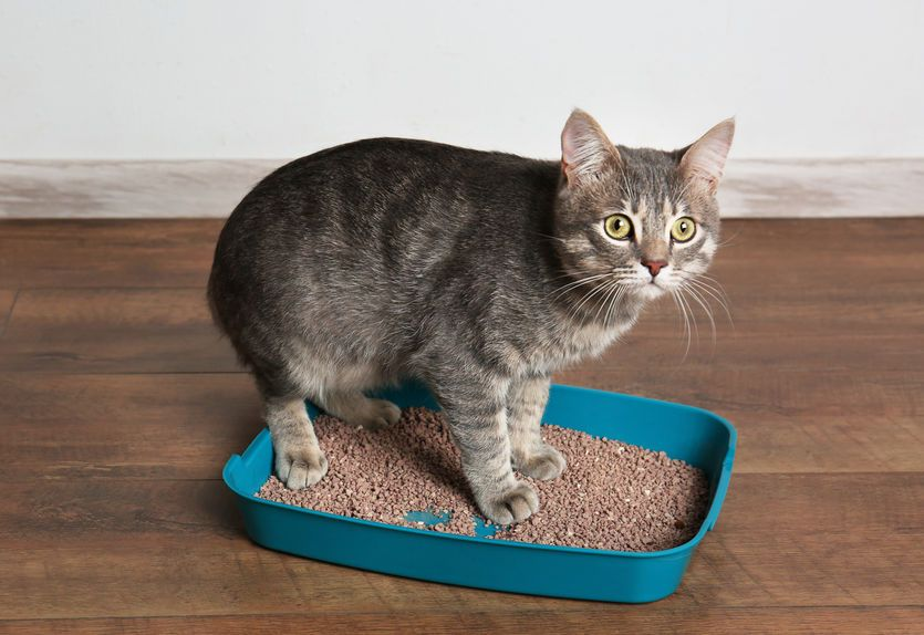 How To Get Your Cat Using The Litter Box Again Two Crazy Cat Ladies Natural Cat Litter Cat Litter Litter Box