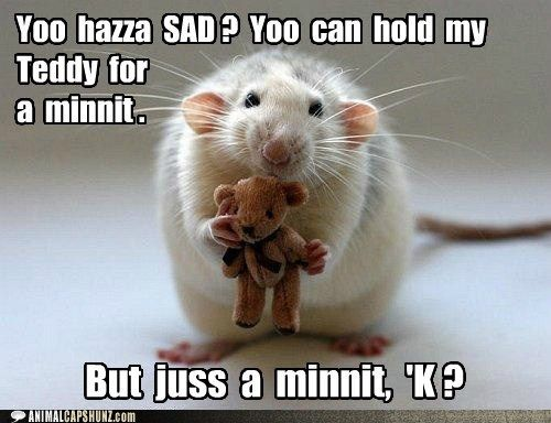 Funny Animal Captions - Yoo  hazza  SAD ?  Yoo  can  hold  my  Teddy  for  a  minnit . #animalcaptions