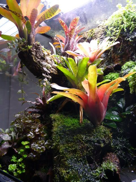 Exo Terra Dripper Plant Drip Watering System: Build Thread For This Tank