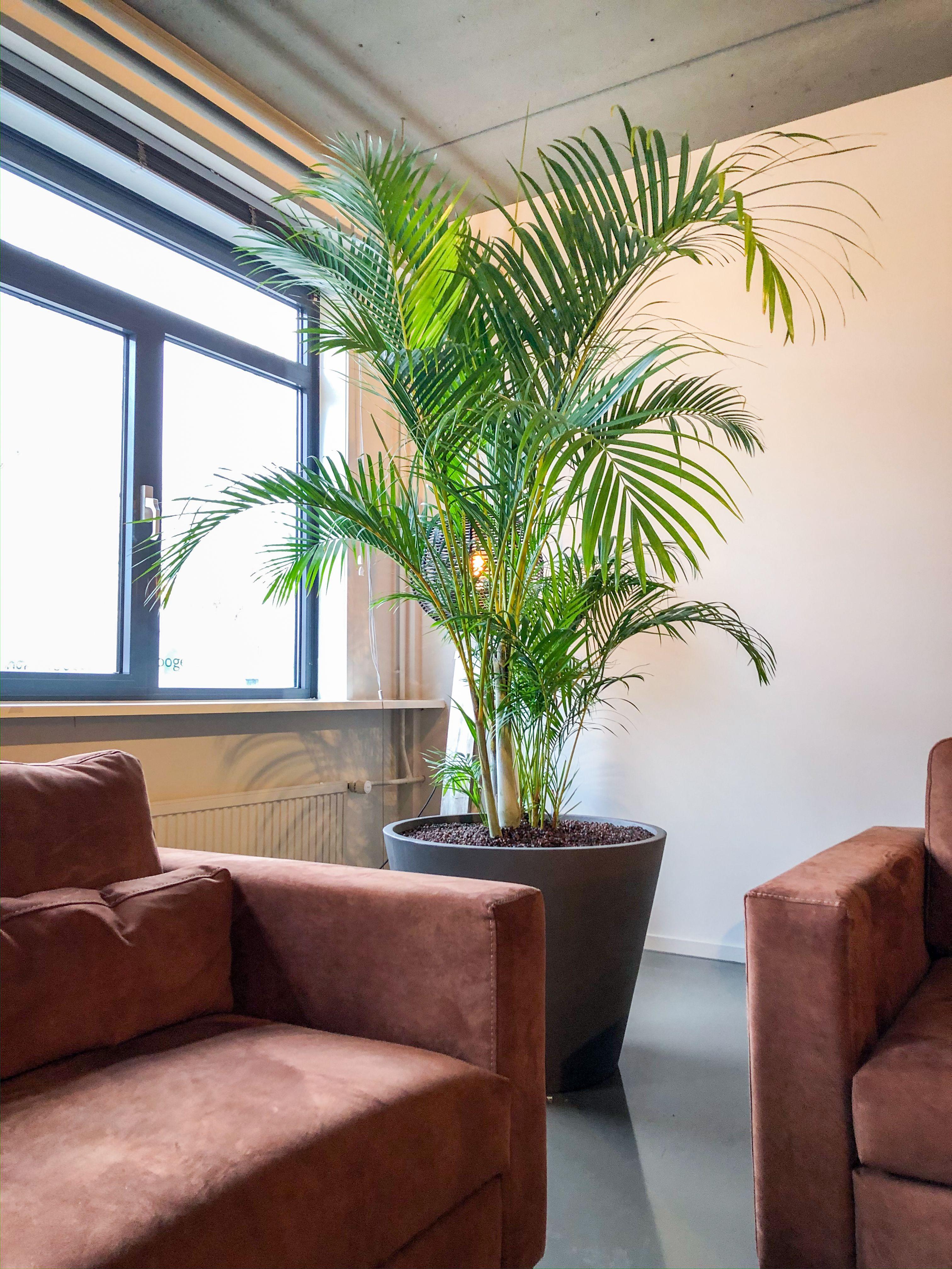 Top 10 Luchtzuiverende Planten Hoogendoorn Projectbeplanting Woonkamerplanten Planten Kamerplanten