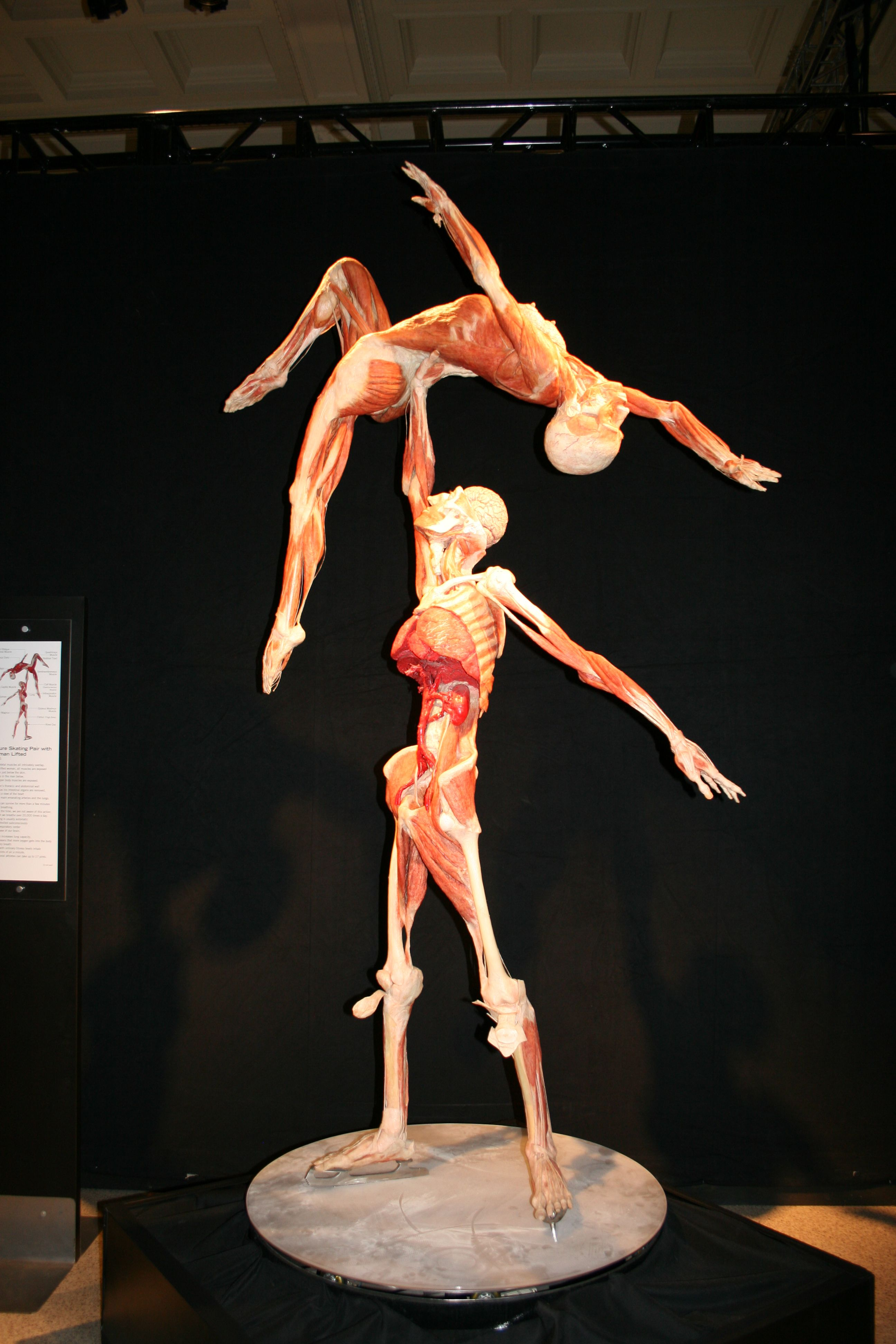 body worlds - a must see for science nerds. | embrace your inner, Muscles