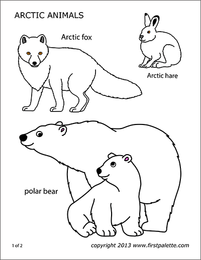 Arctic Fox Free Printable Templates Coloring Pages Firstpalette Com Polar Animals Arctic Animals Artic Animals
