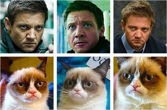 Kitty being Jeremy Renner