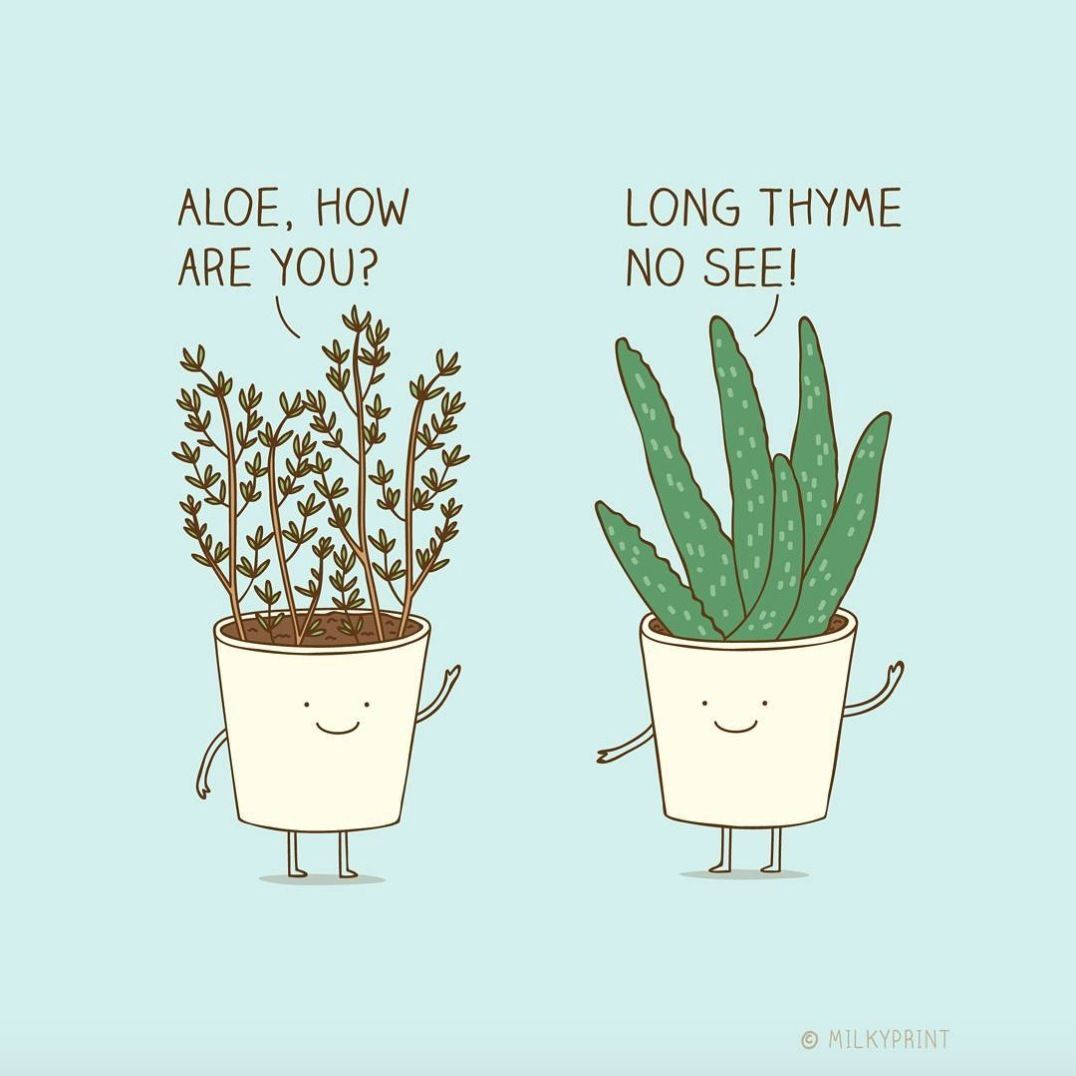 plant jokes thanks for the good laugh milkyprint planthumor plantlove plantlady. Black Bedroom Furniture Sets. Home Design Ideas