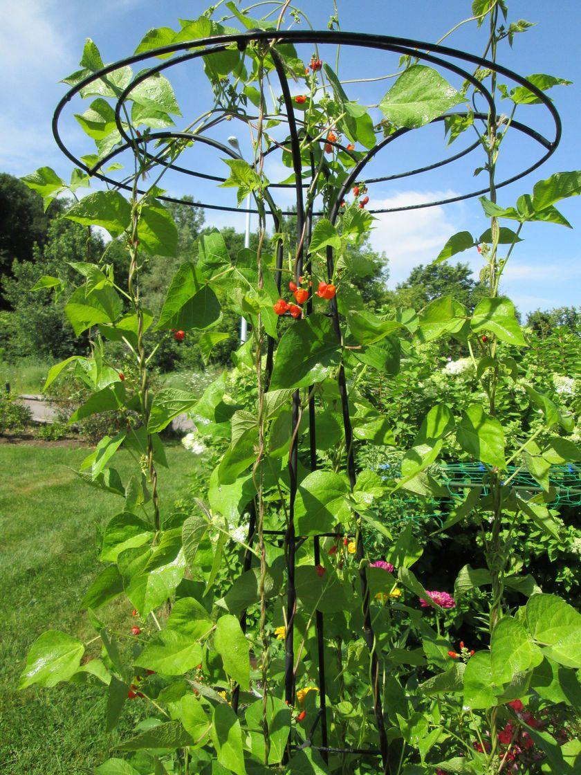 essex garden trellis classic tuteur trellis gardeners supply