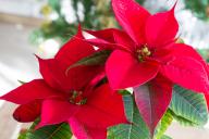 Photo of Le bellissime piastrelle per alcuni nel giardino pensano anche al giardino Annette annette … – Benvenuti nel Blog