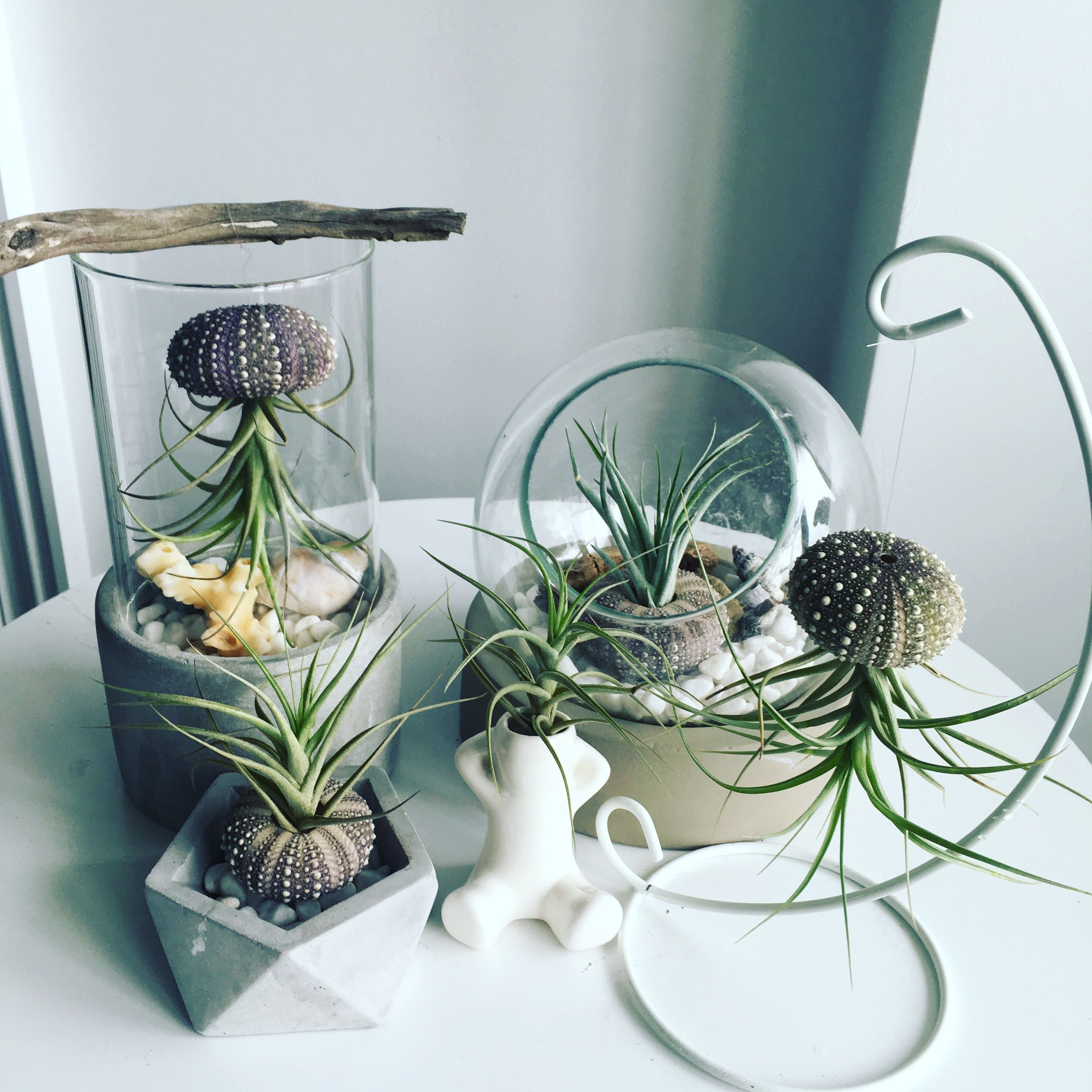 Great Air Plant Displays