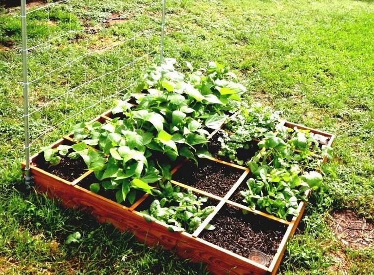 Vegetable Gardening On A Budget In 2021 Vegetable Garden Design Home Vegetable Garden Small Vegetable Gardens