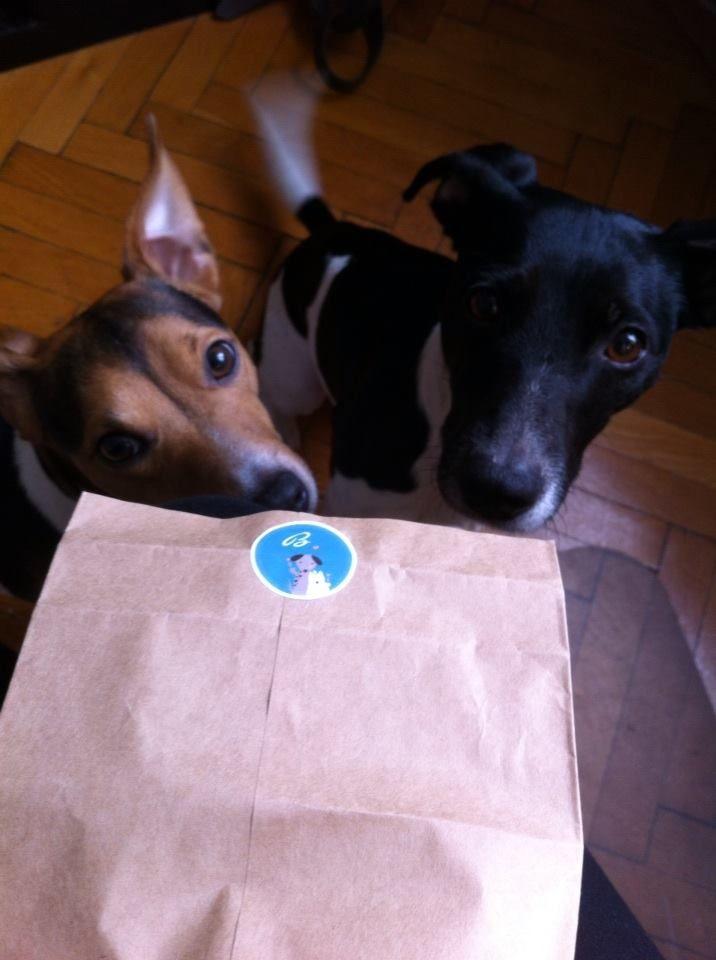 #backhund #hundekekse BackHund Liebevoll. Handgemacht. Einzigartig.. Kekse, CupCakes und CakePops - bei uns liebevoll Knusper, HappCakes und LollyDogs genannt . www.backhund.at  #jackrussell # jackrussellterrier