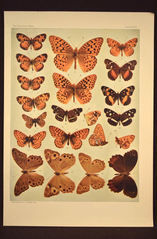 Nature Wall Art Butterfly Print Butterfly Wall Decor Butterflies ...