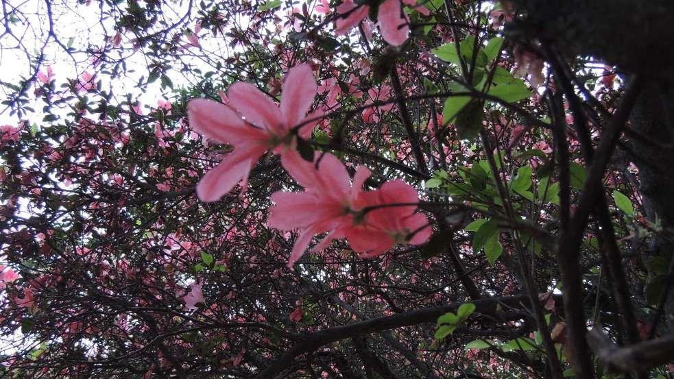Spring *-*