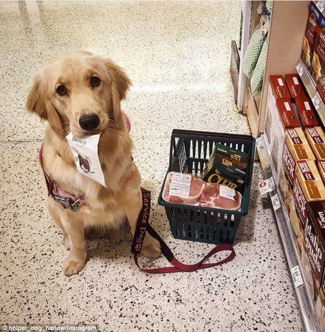 Harlow The Service Dog Can Do Laundry And Grab Drinks From The
