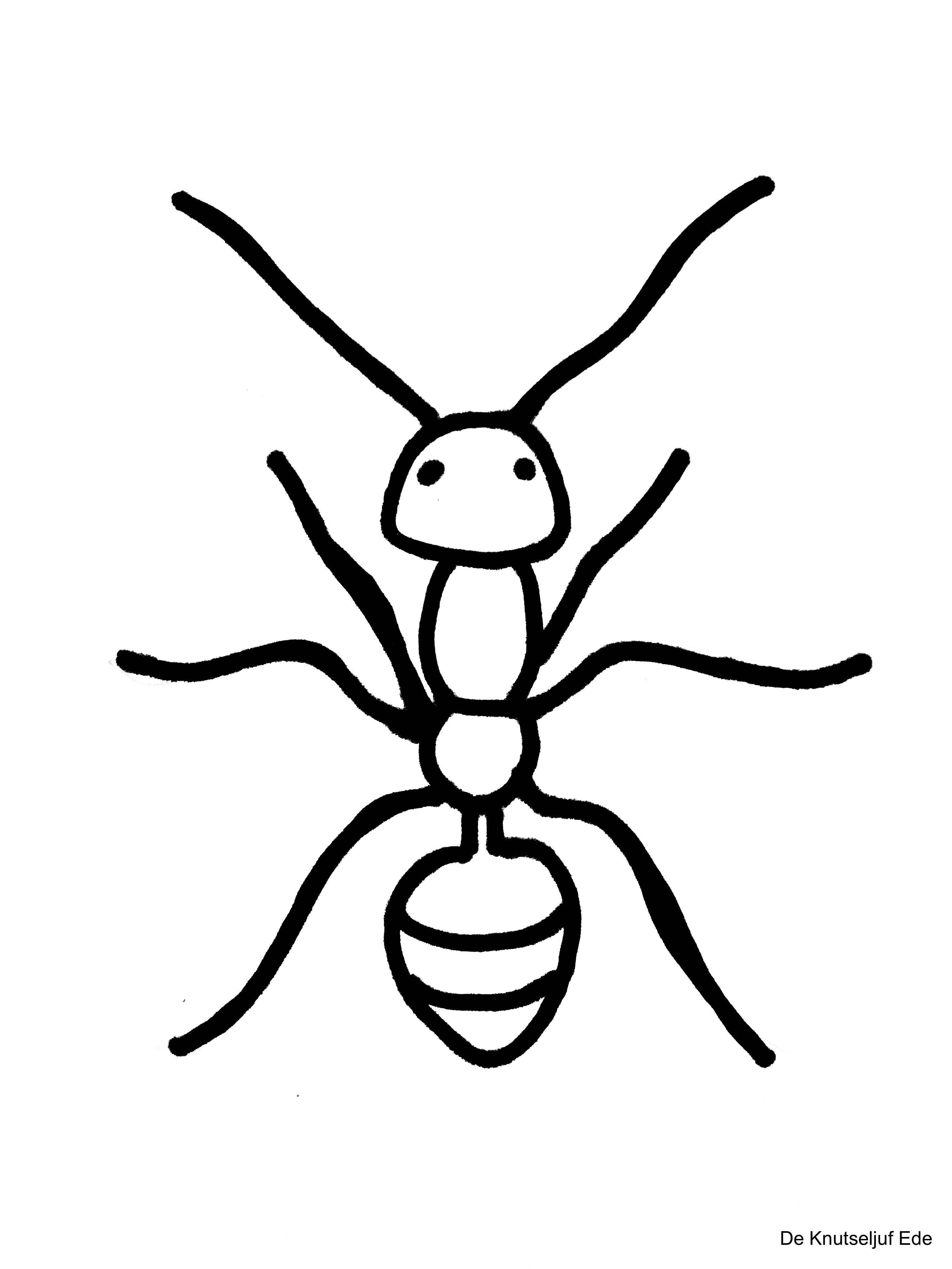Kleurplaten Kriebelbeestjes Insekten Kleurplaat Kleurplaten Deknutseljuf Sprinkhaan De Knutseljuf Ede Gratis Kleurplaten Insecten Kleurplaten