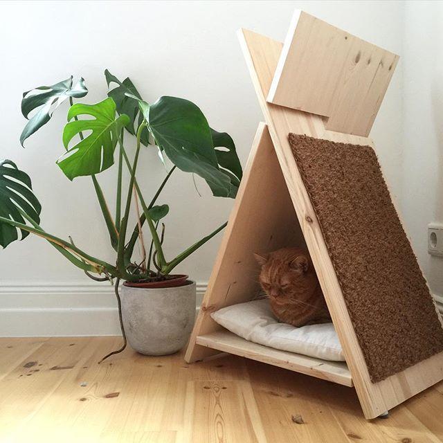 Endlich sitzt er mal in seinem Tipi. Wäre ich Katze würde ich nur da drin liegen.  #cattipi #katzenmöbel #katzenhaus #diycatfurniture #diytipi #catcontent #catspam #monstera #urbanjunglebloggers #redcat #kratzbaum #katzenhöhle #diy #woodworker #kittycats