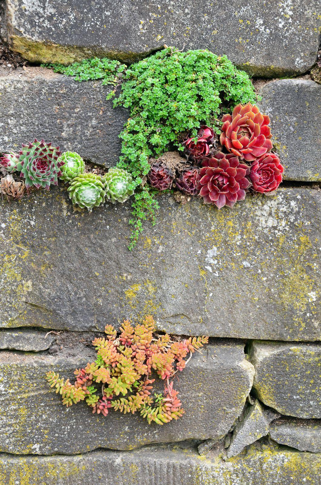 Garden wall #steingartenideen