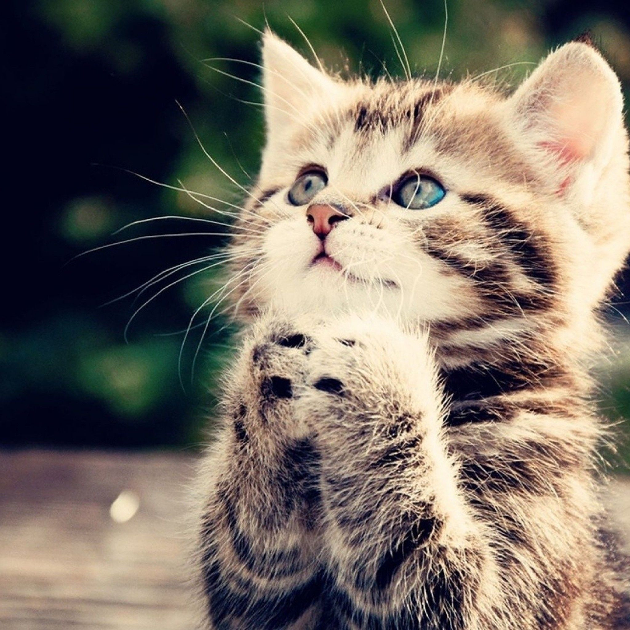 Playing Cute Kittens Ipad Wallpaper Kittens Cutest Cat Wallpaper Space Cat