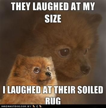 Yes Pomeranian Puppy Dog Pictures Dog Pictures Dogs