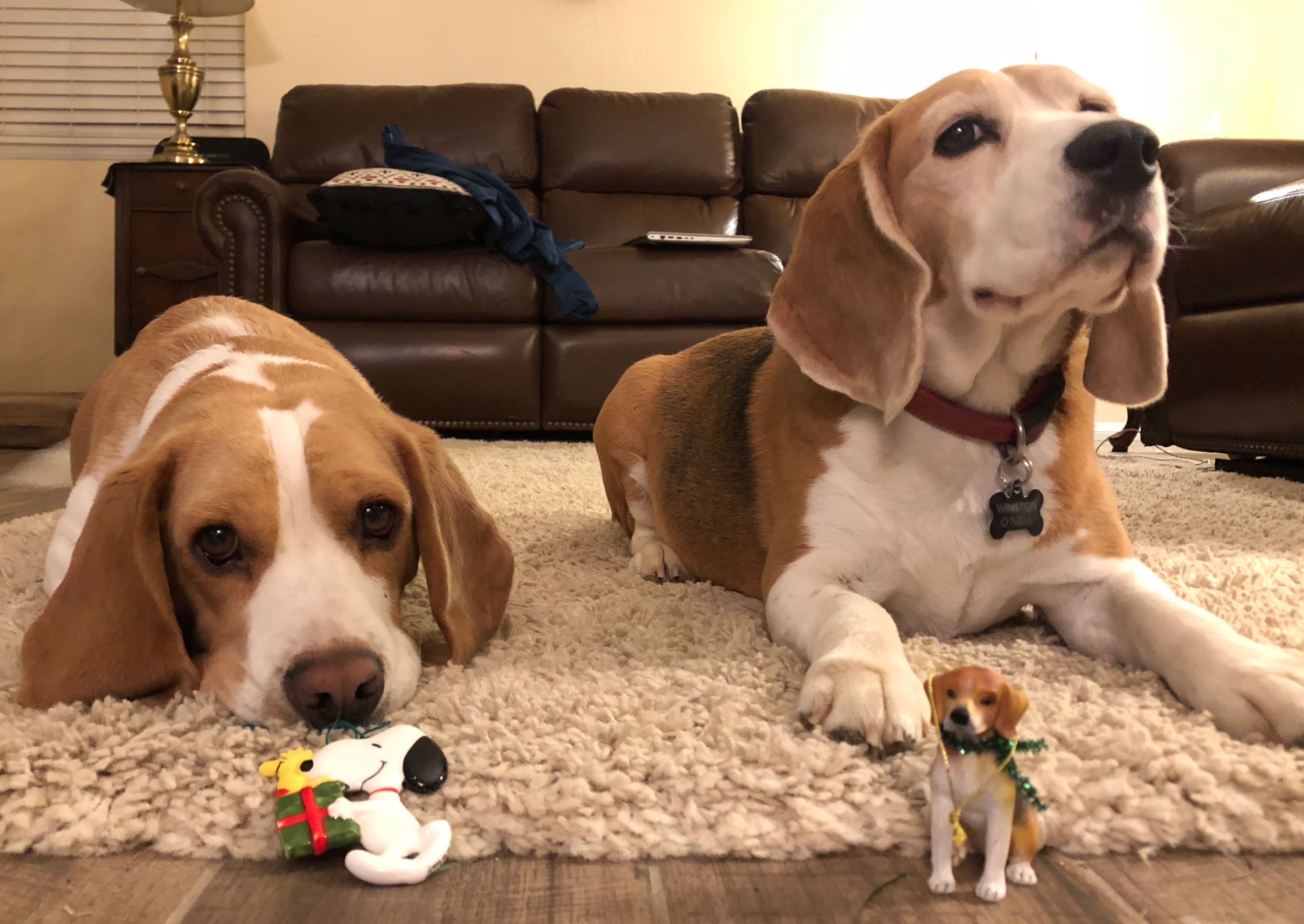 Don T Forget The Beagle Ornaments Merry Christmas Winston