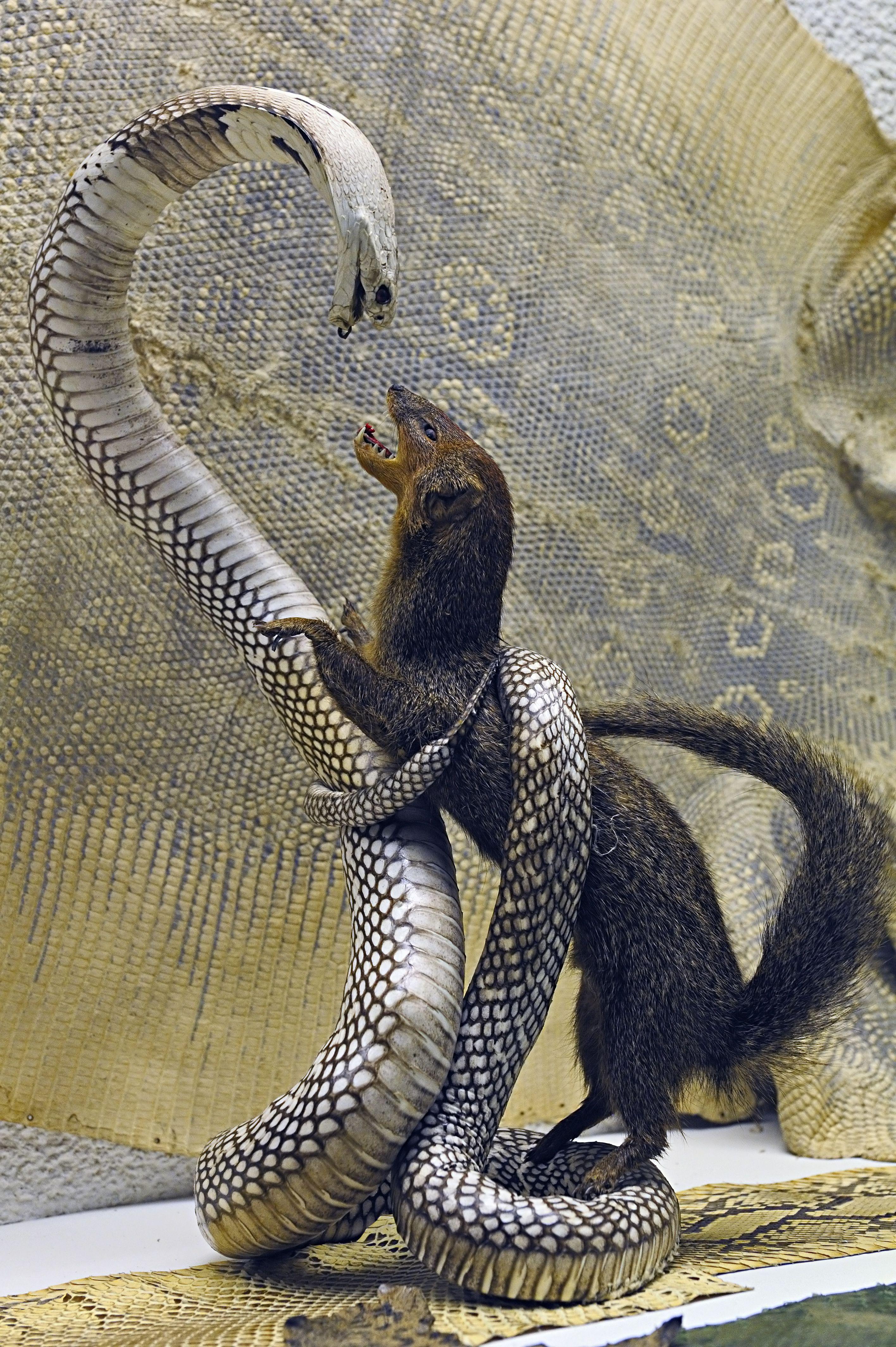 Pin de Gabriel Kötter en animais   Pinterest   Serpientes, Animales ...