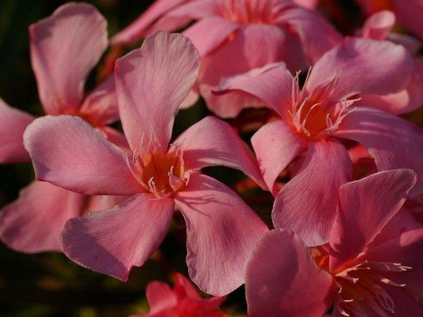 Wann Sind Kubelpflanzen Winterhart Kubelpflanzen Winterhart Mediterrane Pflanzen Winterhart Mediterrane Pflanzen