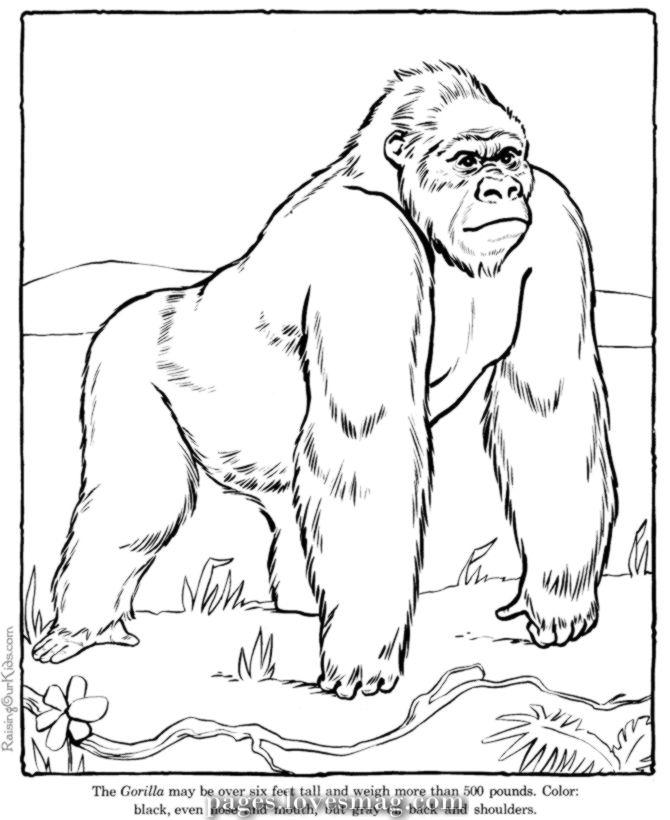Koko The Gorilla Coloring Web Page In Black And White Coloring Gorilla 8211 Anim Zoo Coloring Pages Zoo Animal Coloring Pages Coloring Pictures Of Animals