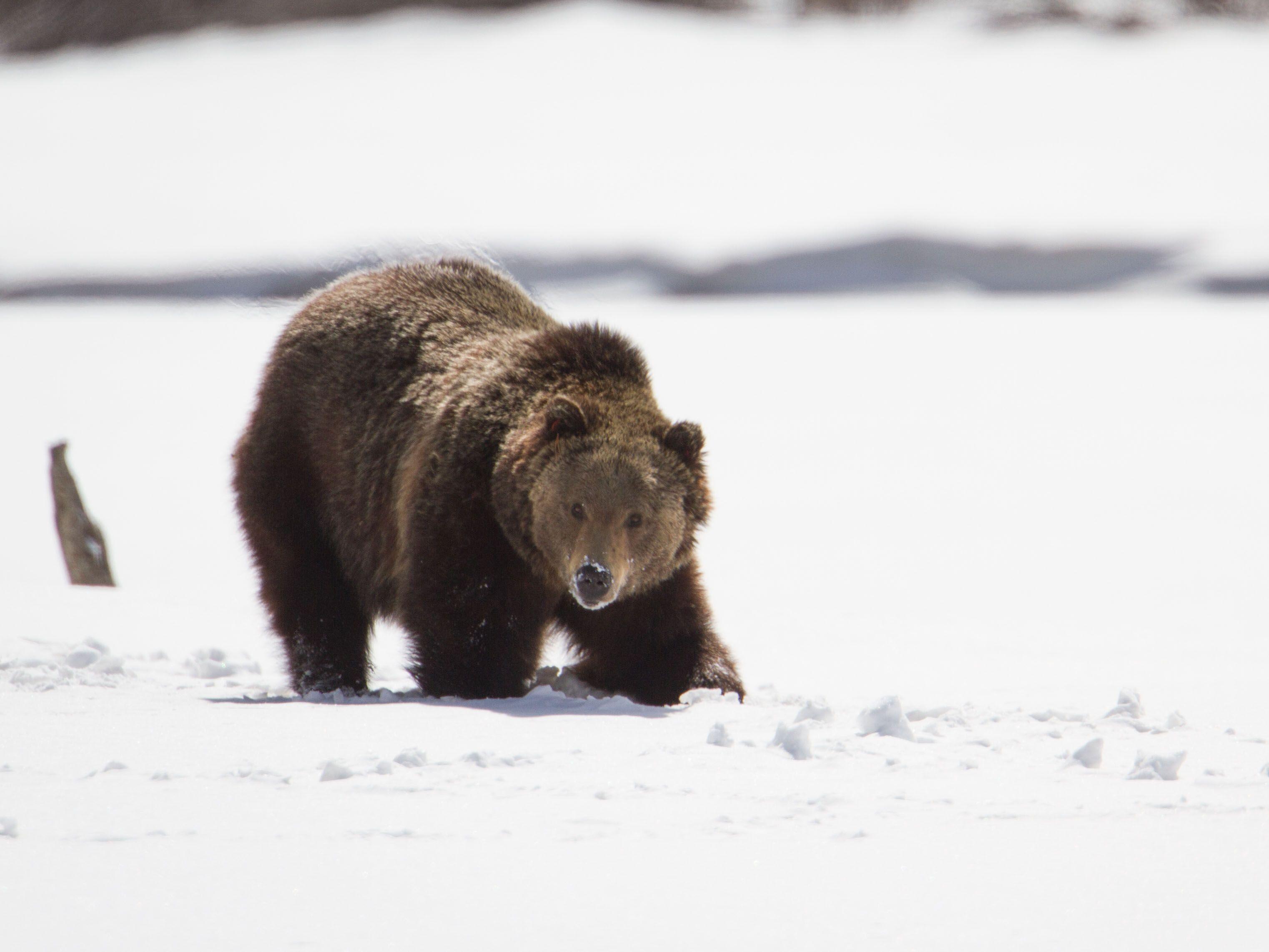 Hibernation Book List Animals that