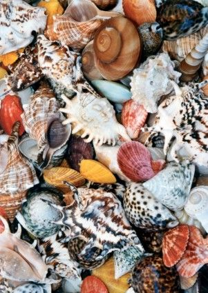Shell mussels colorful Free Photos for free download