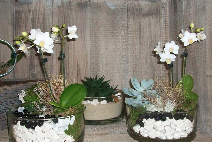 Wei e geschm ckte orchideen decoration deko pinterest for Topfpflanzen dekorieren