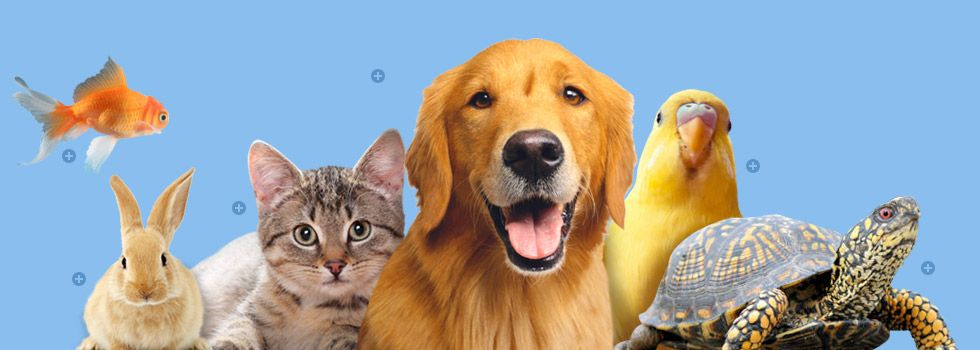 Free Delivery Cheaper Than Stores 20 Off First Purchase Animal Society Pets Animals