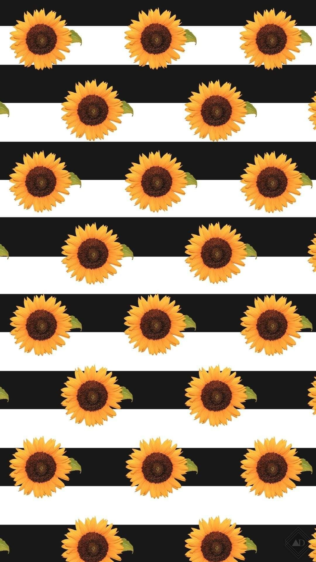 Pin by Cyndy Simons on fall screensavers   Sunflower ...