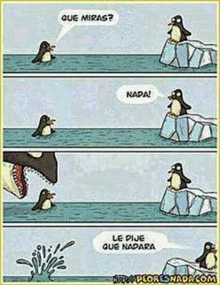 Frases Chistes Anecdotas Reflexiones Amor Y Mucho Mas Chiste Con Pinguinos El Pinguinito Y La Ballena Le D Chistes Divertidos Chistes Memes Divertidos