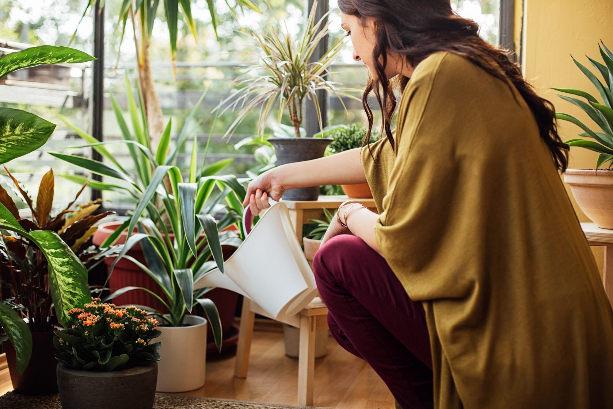 How to know if youre overwatering your houseplants in
