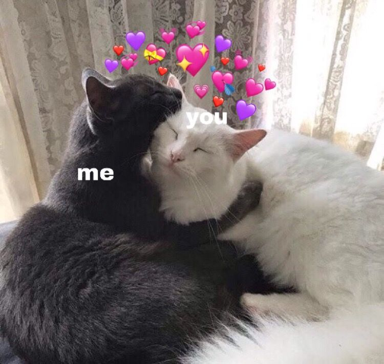 Pin By Yvette Mayordomo On Bradley Cooper Wishes He Had Friends Like These Cute Love Memes Cute Cat Memes Cute Baby Cats