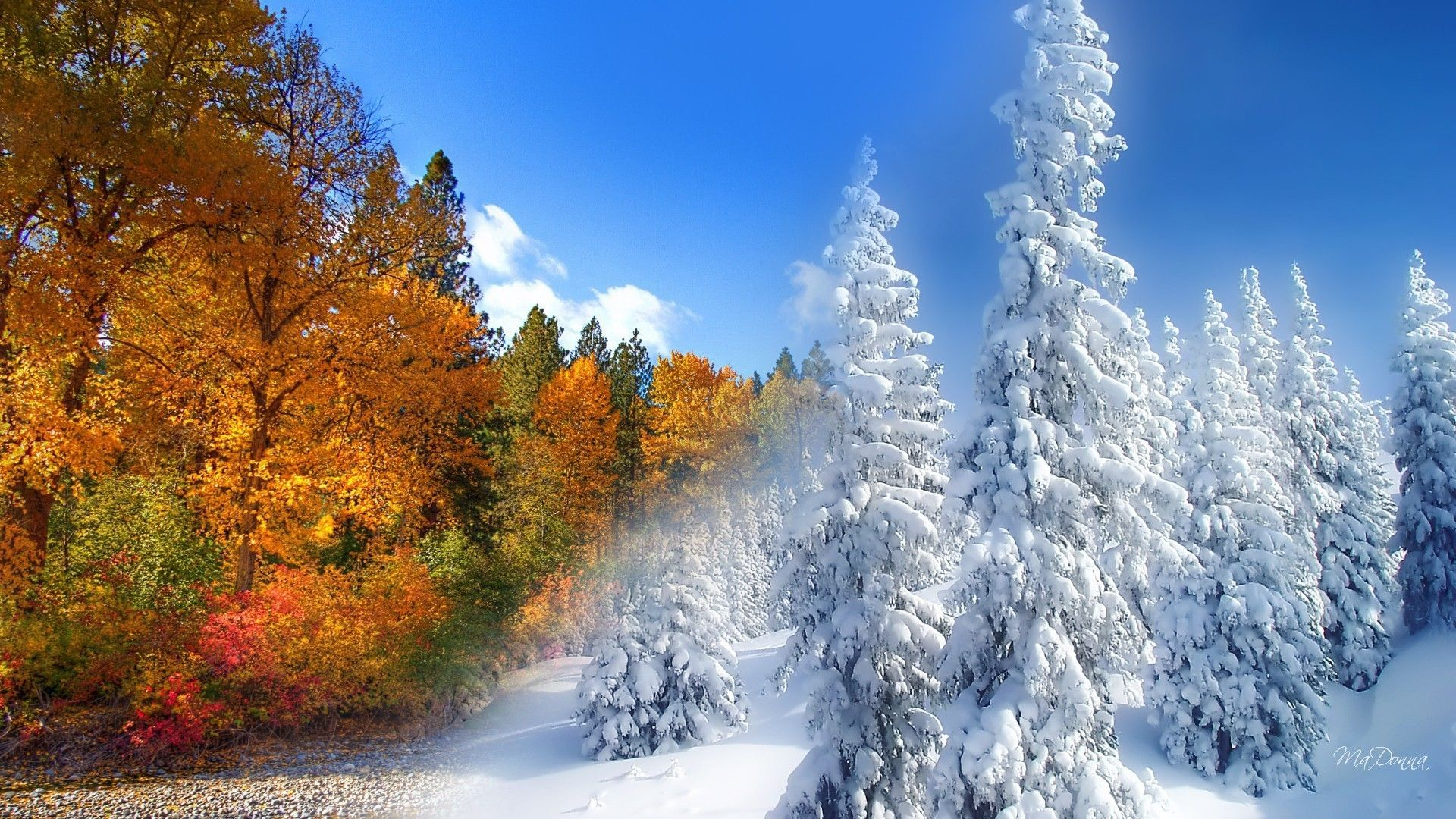 Fall to winter (1920x1080, winter) via www.allwallpaper.in