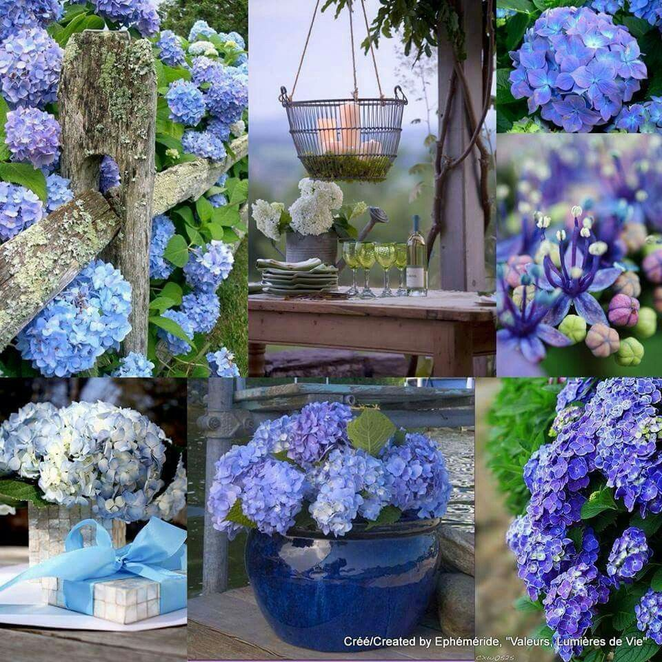 Cheerful Beautiful Collage Beautiful Flowers Floral Decor