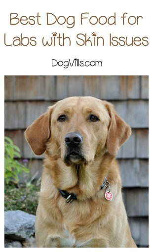 What Is The Best Dog Food For Labs With Skin Issues Best Dog