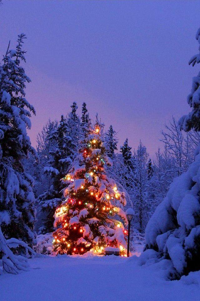 Lone tree Christmas scenery, Christmas lights, Christmas