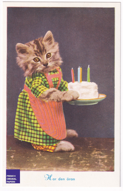 Happy Birthday - Funny cat unused postcard from Sweden 1960s anthropomorphism kitten humanized cake dress pastry candel ephemera vintage
