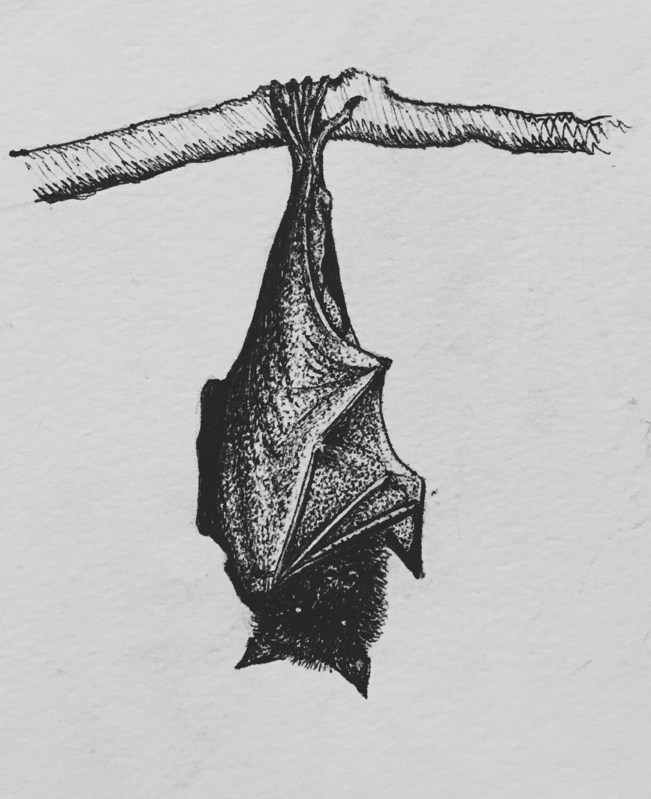Image result for bat in a tree drawing