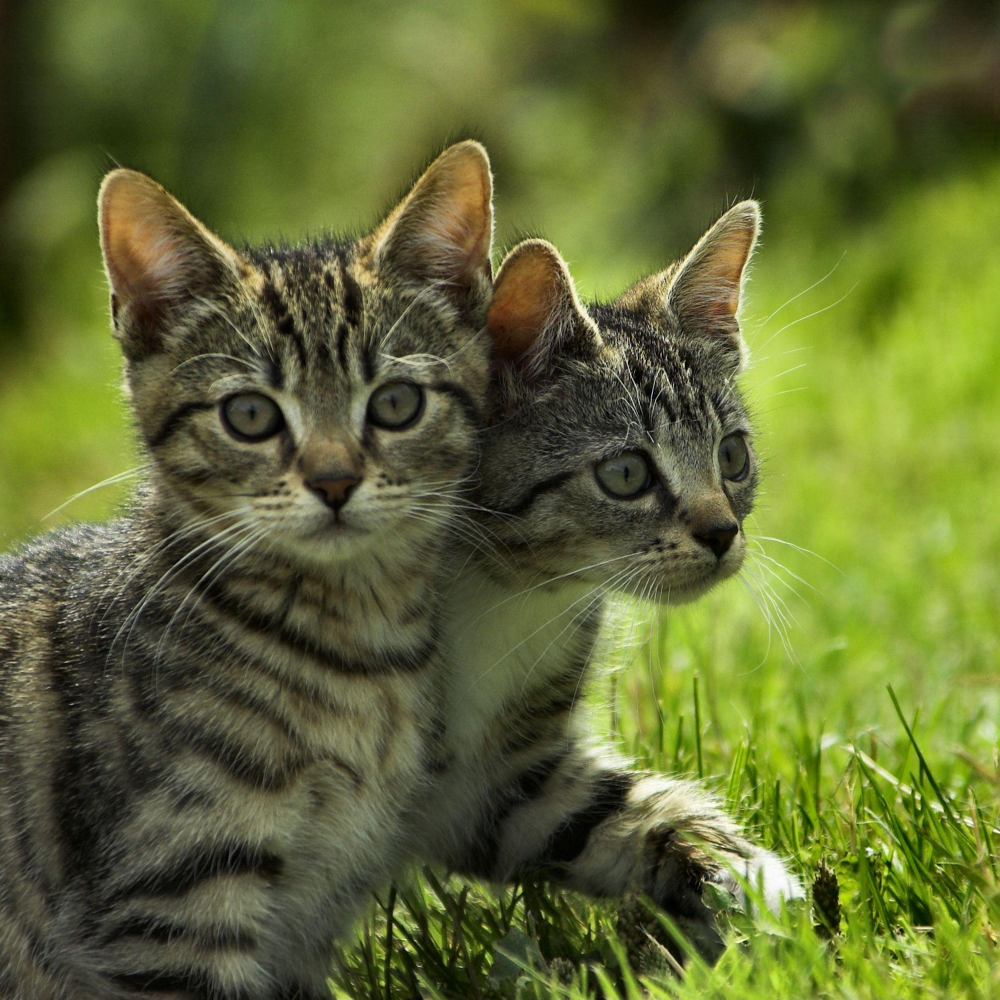 kittens for sale omaha ne