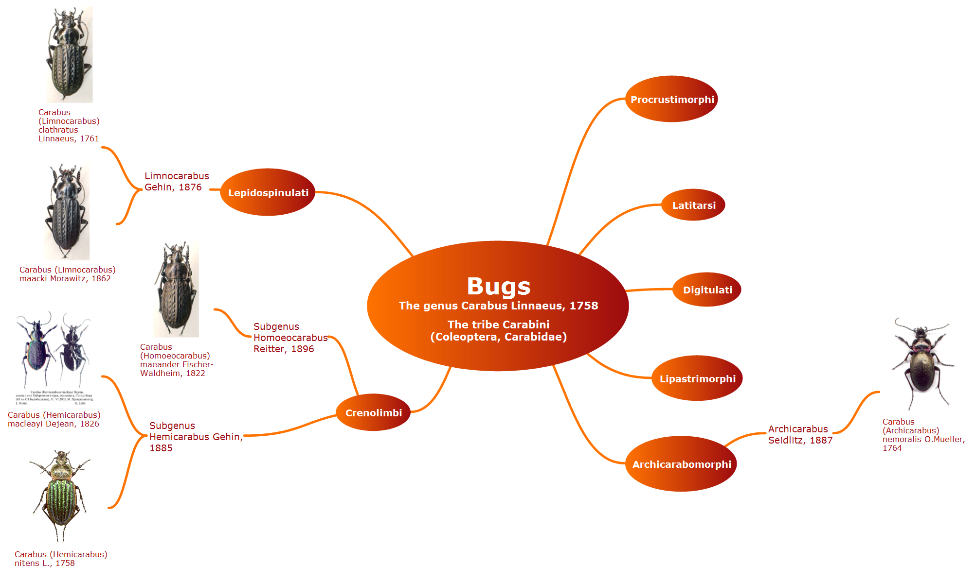 Conceptdraw samples science and education biology mind map for conceptdraw samples science and education biology ccuart Images