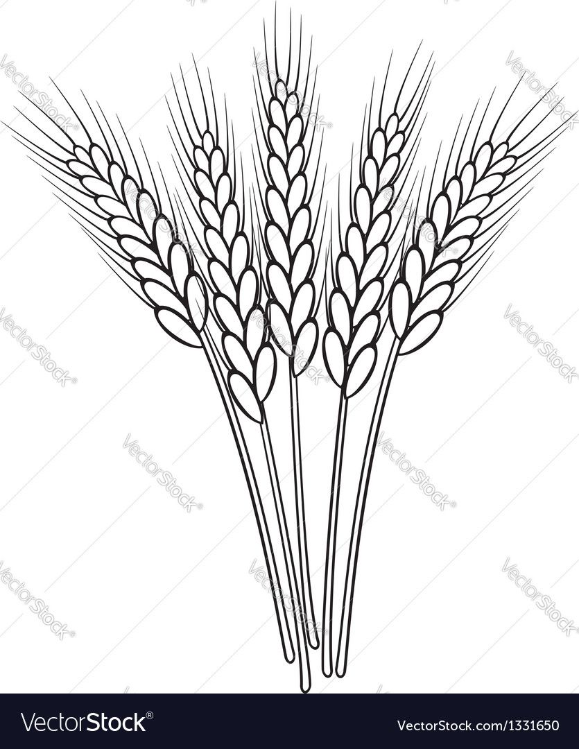 Wheat Ears Royalty Free Vector Image Vectorstock Ad Royalty Ears Wheat Free Ad Wheat Drawing Pyrography Patterns Outline Drawings