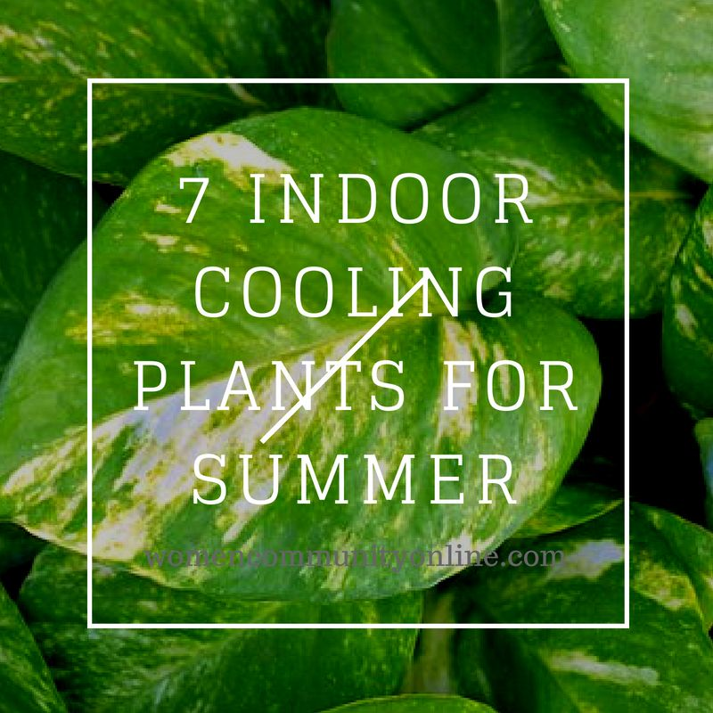 7 Indoor Cooling Plants For Summer Lucky Bamboo Plants Bamboo