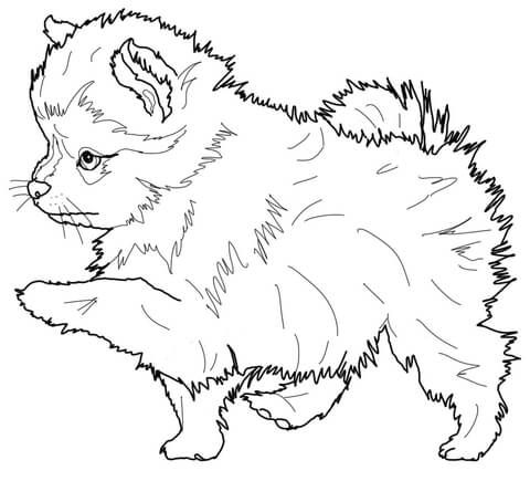 Images of Funny Spitz Coloring Pages - Sabadaphnecottage
