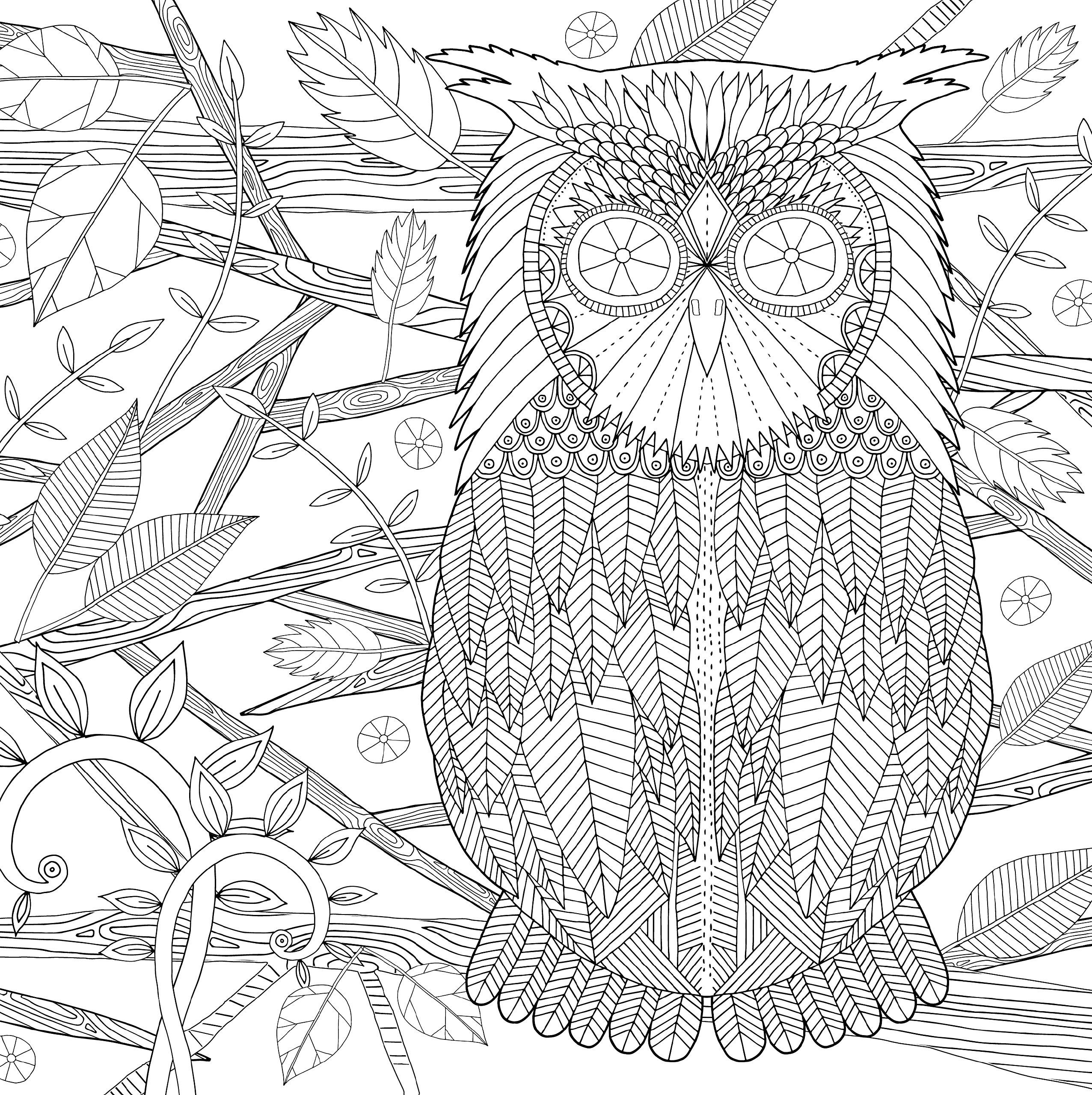 Pin On Coloring Pages Owls
