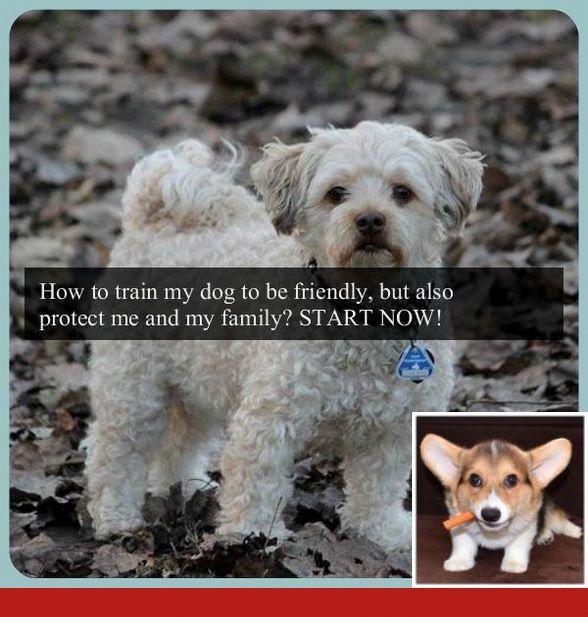 Dog Tricks Intermediate Good Dog Training Tips Barking