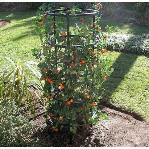 Tomaten & Pflanzen Grow Cage (Ultimate Grow Cage)  Tomaten & Pflanzen Grow Cage (Ultimate Grow Cage)  The post Tomaten & Pflanzen Grow Cage (Ultimate Grow Cage) appeared first on Pflanzen ideen. #tomatenpflanzen Tomaten & Pflanzen Grow Cage (Ultimate Grow Cage)  Tomaten & Pflanzen Grow Cage (Ultimate Grow Cage)  The post Tomaten & Pflanzen Grow Cage (Ultimate Grow Cage) appeared first on Pflanzen ideen. #tomatenpflanzen