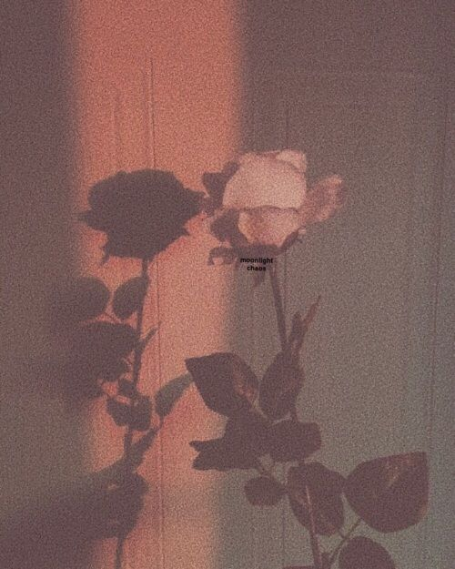 i love roses hahah.... im weird follow me on We Heart It