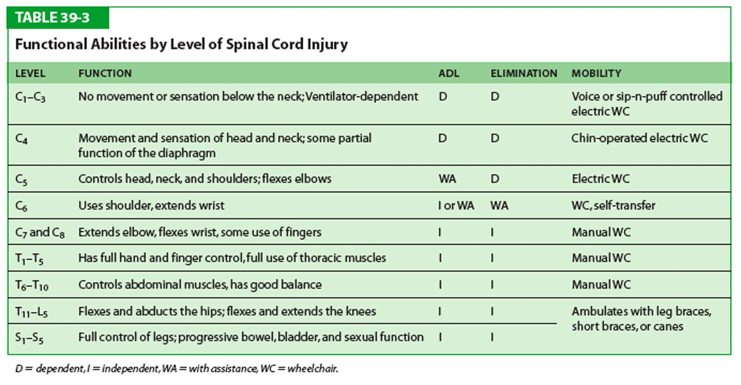 Functional Abilities By Level Of Spinal Cord Injury